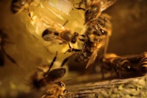 Горький мед